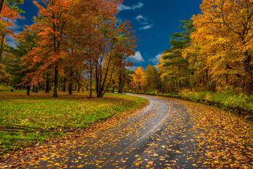 autumn in the park Fotoväggar