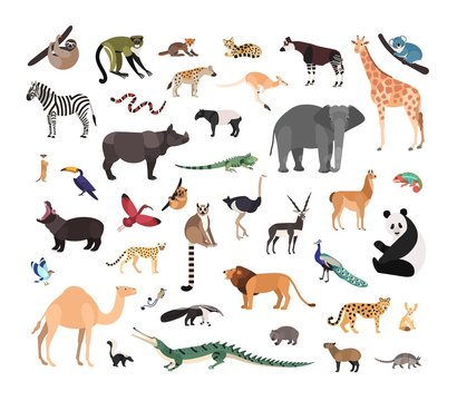 Collection of exotic wild animals isolated on white background. Bundle of fauna species living in savannah, jungle and desert. Wildlife set. Colorful vector illustration in flat cartoon style.