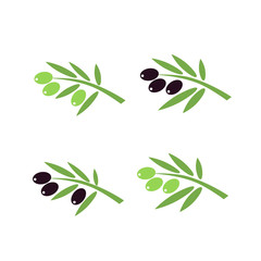 Vector olive branch with olives on white background