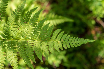 non specific nature forest bed details of foliage