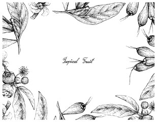 Tropical Fruit, Illustration Frame of Hand Drawn Sketch of Goiaba de Anta, Mess Apple or Bellucia Grossularioides and Giant Lau Lau or Eugenia Megacarpa Fruits on White Background.