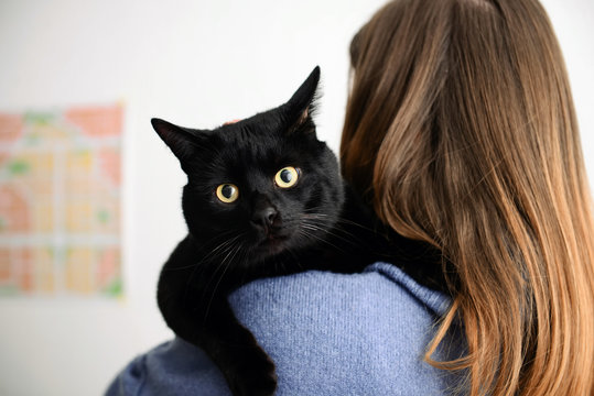 Cute black cat with owner at home