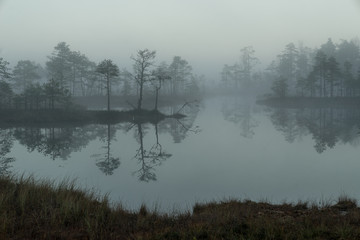 Sunrise in the bog landscape. Misty marsh, lakes nature environment background