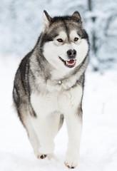 dog on a winter