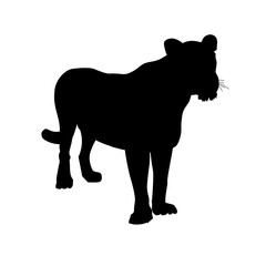 Silhouette of lioness