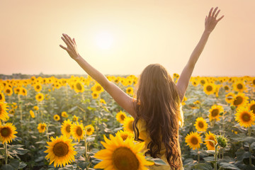 Beautiful woman in a field of sunflowers