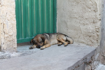 Cachorro descansando no Vidigal