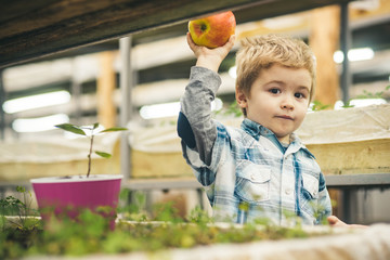 planting apple trees. small boy share apple and planting trees. planting apple trees with little gardener. planting apple trees in greenhouse