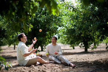 Two male friends sitting on the ground in an orchard and juggling apples