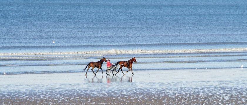 Entrainement des chevaux de courses sur la plage de Cabourg en Normandie