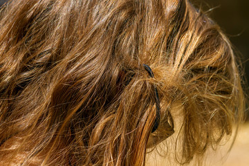 Hair of a Blond Girl Tangled in a Pony Tail Holder