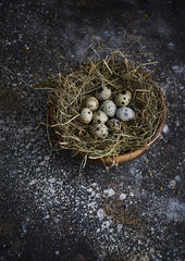 Overhead view of speckled eggs on bed of straw in a bowl