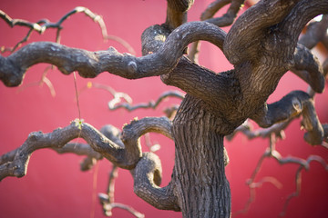 Entwined branches of a tree against a red background.