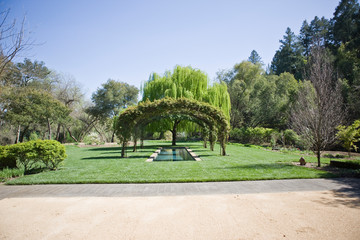 Tree canopy over a pond in a formal outdoor garden.