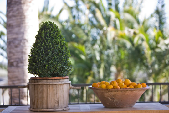 Large clay bowl of lemons sitting next to a shrub in a wooden pot.