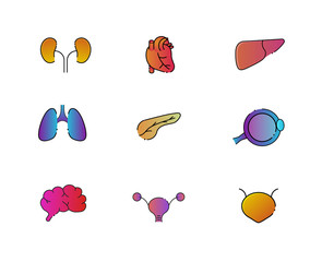 Vibrant human organ icons with black outline