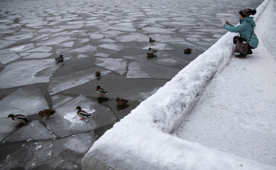 A woman takes pictures of ducks on Moskva river in Moscow,