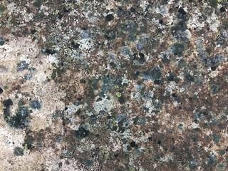 Colorful Lichen Grows on Limestone