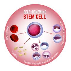 Self-renewing stem cell