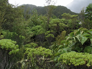 Nature in New Zealand. Milford Sound. South Island
