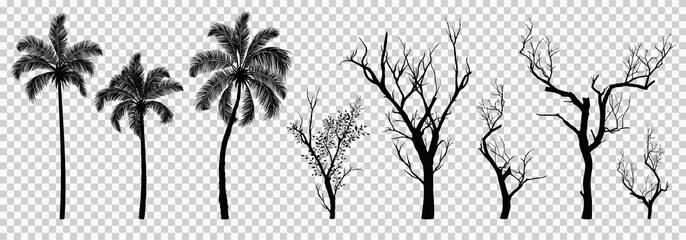 Silhouette of dried tree and palm tree isolated, vector illustration eps10