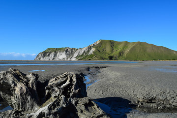 The cliffs stand high in the backgound with the calm beach below in Gisborne, New Zealand.
