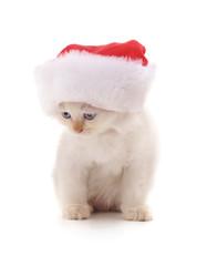 Kitten in Christmas hat.