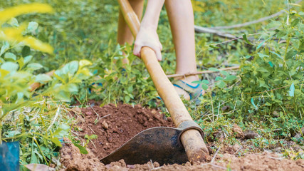 Loosen the dry soil with a hoe.Working soil with hoe, close-up