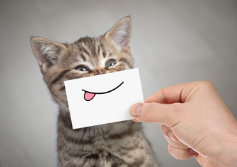 Papier Peint - funny cat smiling with tongue