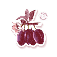 Sticker with hand drawn plum branch