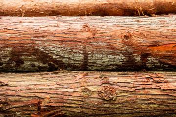 Reddish bark on freshly cut Japanese cedar trees