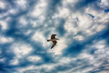 Photo of gull.