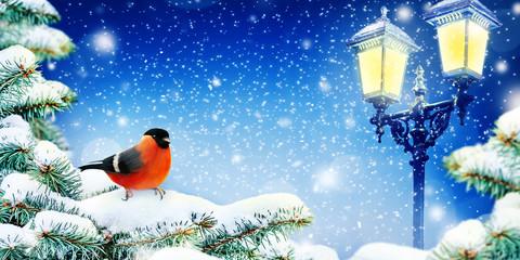Winter Background. Christmas card or wallpaper. Bullfinch on a snowy fir branch. Light of street lamps.