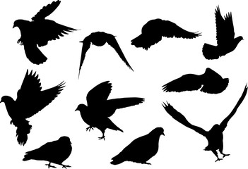 ten dove black silhouettes isolated on white