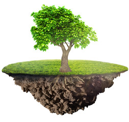 green grass island with tree