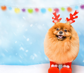 funny dog with Сhristmas decoration