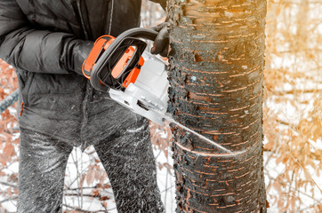 man in a dark jacket cuts a tree with the help of an electric chainsaw. Deforestation. Harvesting wood. Scaffolding