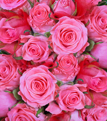 light pink roses flowers background
