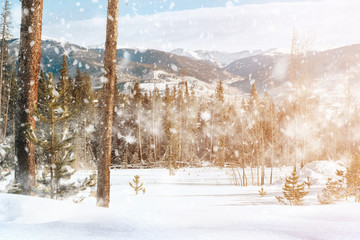 Falling snow with nice view of Christmas trees and mountain covered by snow.