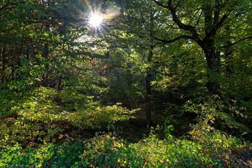 Rambouillet forest undergrowth inn summer season
