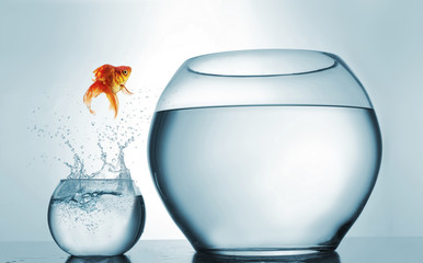 Goldfish jumping in a bigger bowl - aspiration and achievement concept.