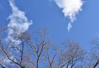 落葉した木と青空