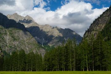paesaggio alpino con bosco di Larici (Larix decidua)