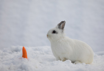 white Easter bunny in the winter in the snow