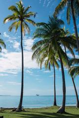 Palms near water