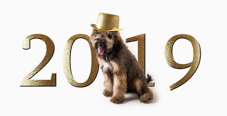 2019 New Years Dog