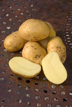 Solanum tuberosum - Monalisa potato