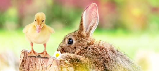 Tierbabys zu Ostern Osterhase und Osterküken