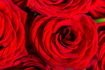 Beautiful bouquet of red roses, love and romance concept
