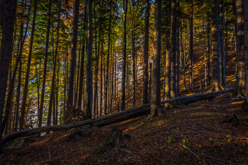 Autumn brown and yellow forest full on fallen leaves on the way up to Stadelwand summit, Schneeberg, Alpen, lower Austria